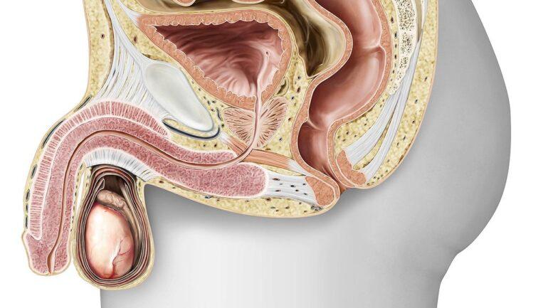Jaka jest funkcja prostaty?