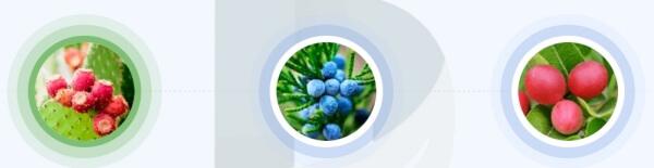 ImpreSkin - Jakie składniki zawierają kapsułki?