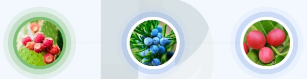 EcoSlim - Jakie są aktywne składniki kropli?